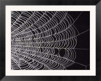 Spider-Web-