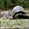 Hippo_goto