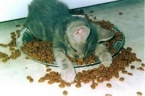 Kitten_in_bowl