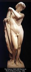 Narcissus5009_1